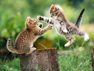 The Kitten Attack